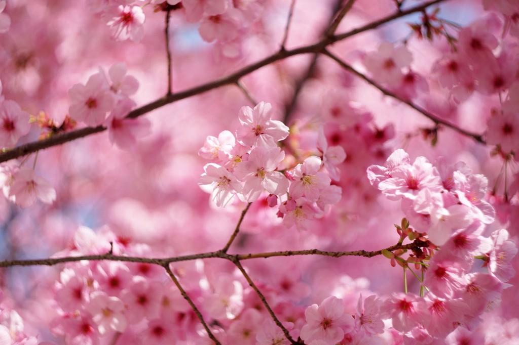 Doe je ook mee met de sakura training op zondag 7 april?